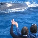 Hervey-bay-whale-watching-humpback